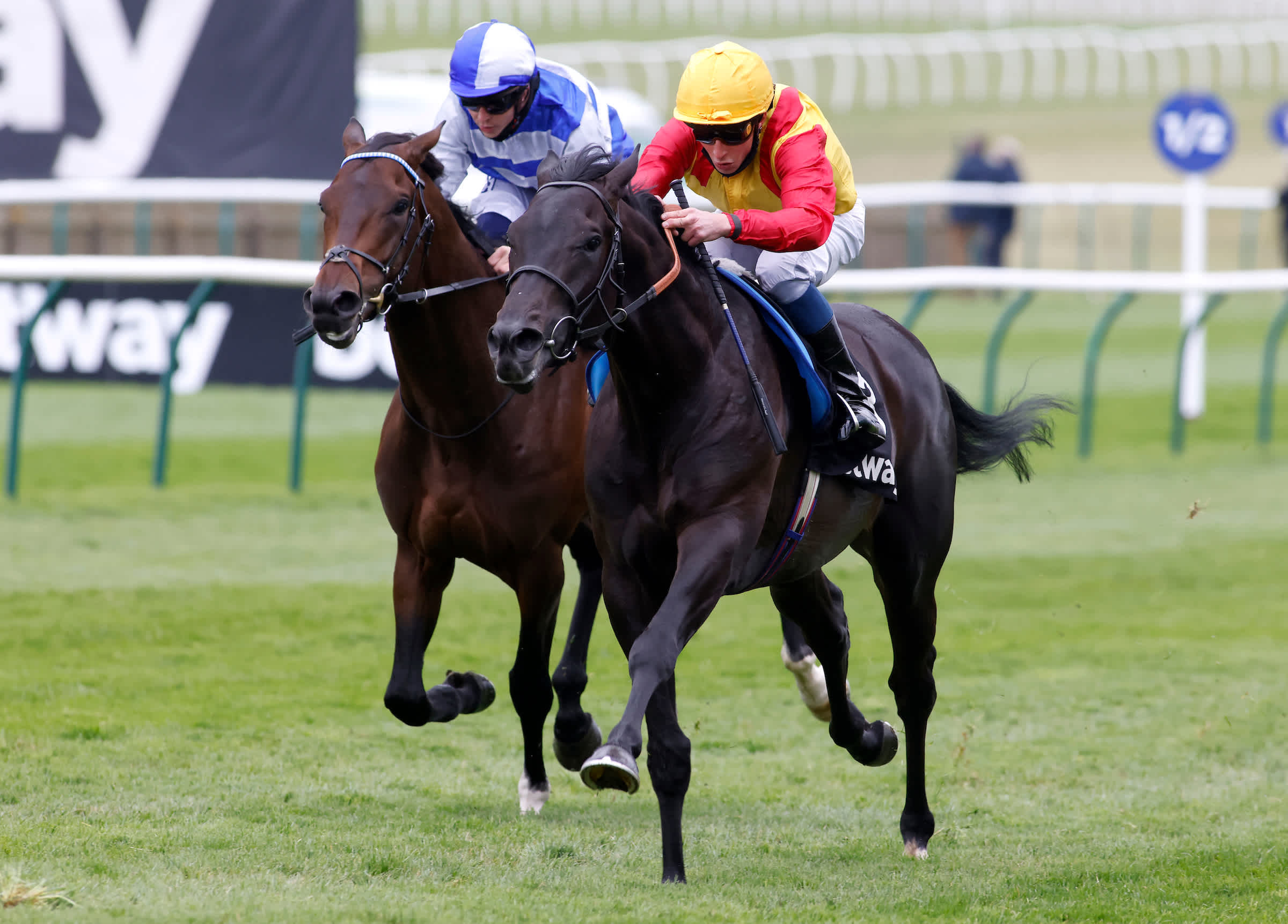 Frankie To Win The Derby